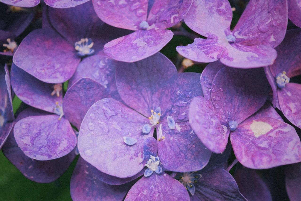 Quelles fleurs pour son jardin en hiver ?
